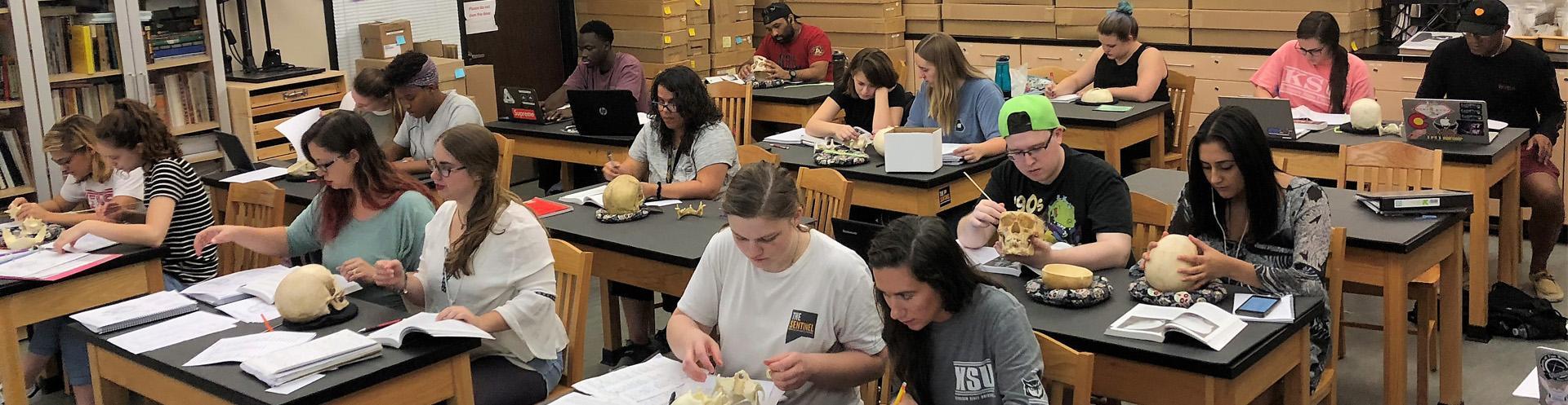 Study the Human Skeleton